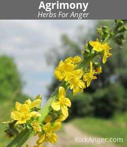Agrimony - Herbs For Anger