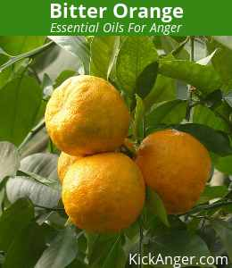 Bitter Orange - Essential Oils For Anger