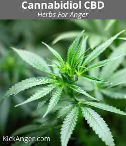 Cannabidiol CBD - Herbs For Anger