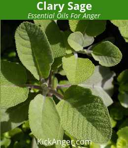 Clary Sage  - Essential Oils For Anger