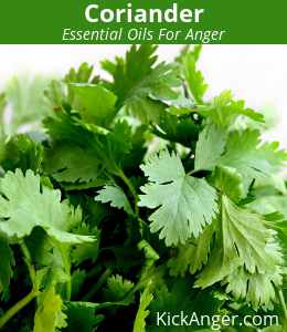 Coriander - Essential Oils For Anger