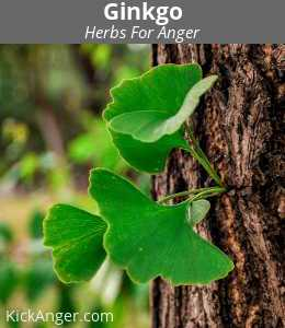 Ginkgo - Herbs For Anger