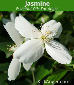 Jasmine - Essential Oils For Anger