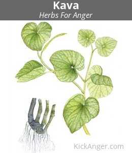 Kava - Herbs For Anger
