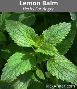 Lemon Balm - Herbs For Anger