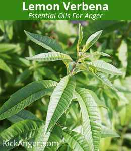 Lemon Verbena - Essential Oils For Anger