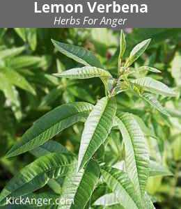 Lemon Verbena - Herbs For Anger