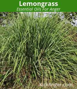 Lemongrass - Essential Oils For Anger