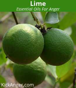 Lime - Essential Oils For Anger