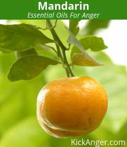 Mandarin - Essential Oils For Anger