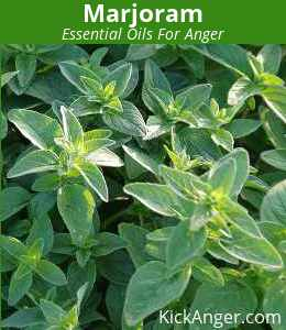 Marjoram - Essential Oils For Anger
