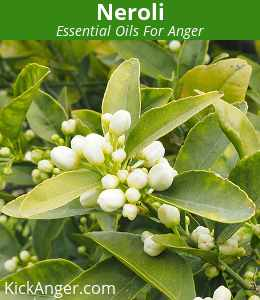Neroli - Essential Oils For Anger