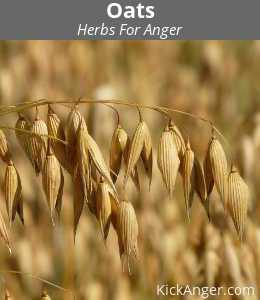 Oats - Herbs For Anger