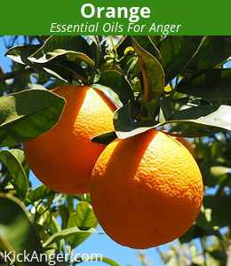 Orange - Essential Oils For Anger