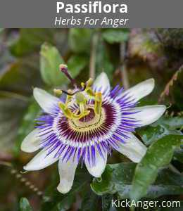 Passiflora - Herbs For Anger
