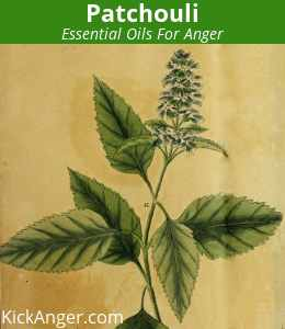 Patchouli - Essential Oils For Anger