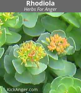 Rhodiola - Herbs For Anger