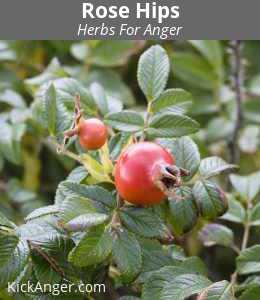 Rose Hips - Herbs For Anger