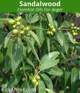 Sandalwood - Essential Oils For Anger