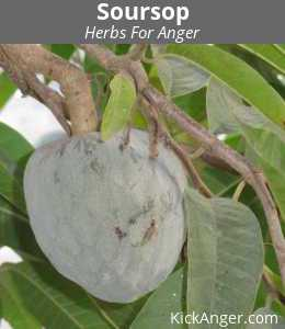 Soursop - Herbs For Anger