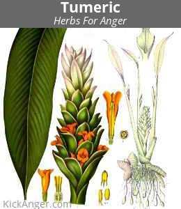 Tumeric - Herbs For Anger