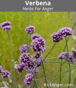 Verbena - Herbs For Anger