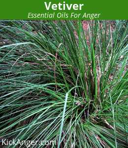 Vetiver - Essential Oils For Anger