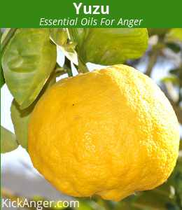 Yuzu - Essential Oils For Anger